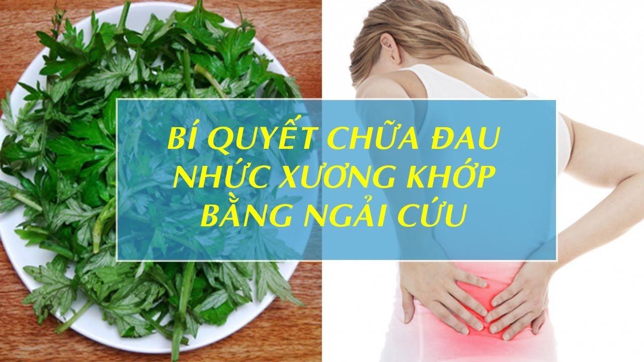 Cây ngải cứu chữa đau nhức xương khớp hiệu quả